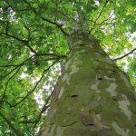 Gute Argumente für Holz